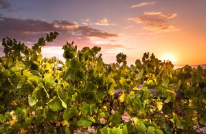 Port Lincoln Wineries